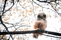Owl at Sunset, Preserved Light Photography