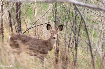 i) Smith ii) C-20 iii) Penticton, Summer, Mule Deer, wildlife